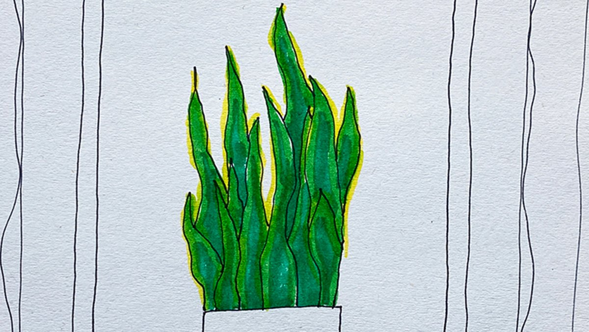 How To Draw: Plants